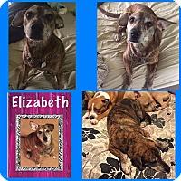 Adopt A Pet :: Elizabeth - Salisbury, NC
