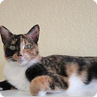 Adopt A Pet :: Annette - Fargo, ND