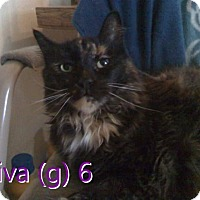 Adopt A Pet :: Diva - North Branch, MI