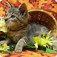 Adopt A Pet :: Benji - Columbus, NE