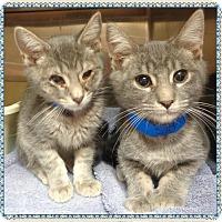 Adopt A Pet :: BRUNO AND ADAM - Marietta, GA