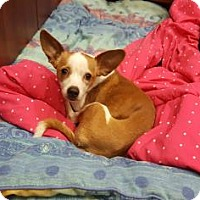 Adopt A Pet :: Penny - Scottsdale, AZ