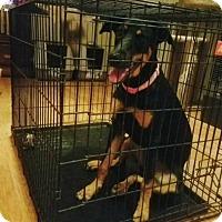 Adopt A Pet :: Jazzy - Cerritos, CA