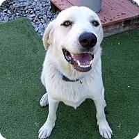 Adopt A Pet :: Ada - Buckeystown, MD