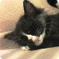 Adopt A Pet :: Teeny Dojo - Walworth, NY