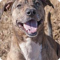 Adopt A Pet :: Bennie - Huntsville, AL