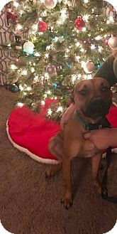Labrador Retriever Mix Dog for adoption in Huntington, Indiana - Bubba