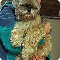 Adopt A Pet :: Bing - Sudbury, MA