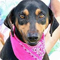 Adopt A Pet :: Josie - Wenatchee, WA