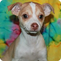 Adopt A Pet :: Jr - Phelan, CA