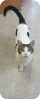 Domestic Mediumhair Cat for adoption in Mobile, Alabama - Isis