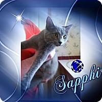 Adopt A Pet :: Sapphire - Washington, DC