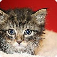 Adopt A Pet :: ESTEBAN - SILVER SPRING, MD