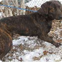 Adopt A Pet :: Cookie - Foster Needed! - kennebunkport, ME