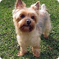 Adopt A Pet :: Bree - Baton Rouge, LA