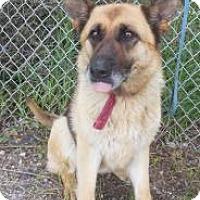 Adopt A Pet :: Maddox - Gary, IN