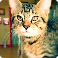 Adopt A Pet :: Daytime - Green Bay, WI