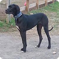 Adopt A Pet :: Ember - York, PA