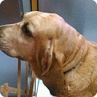 Adopt A Pet :: Eve - St, Augustine, FL