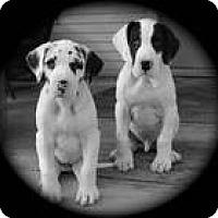 Adopt A Pet :: Ketel - Cleveland, OH