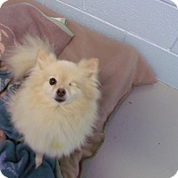 Adopt A Pet :: Willie - Muskegon, MI
