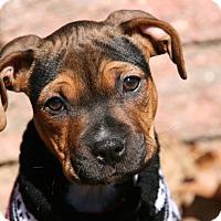 Adopt A Pet :: Cashmere - Burlington, NJ