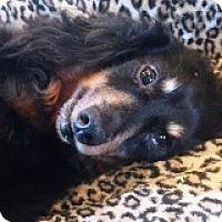 Adopt A Pet :: Eugene Felsnick - Houston, TX
