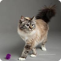 Adopt A Pet :: Delaney - Eagan, MN