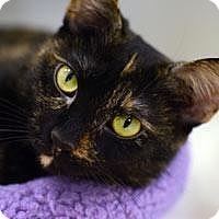 Adopt A Pet :: Thalia'12 - New York, NY