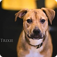 Adopt A Pet :: Trixie - West Bend, WI