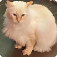 Adopt A Pet :: Gimili - Ennis, TX