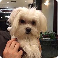 Adopt A Pet :: Sammy - Long Beach, NY
