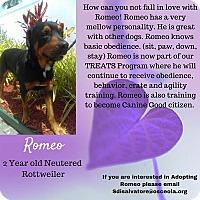 Adopt A Pet :: Romeo - St. Cloud, FL