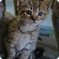 Adopt A Pet :: O'Malley $75 - Seneca, SC