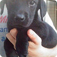 Adopt A Pet :: Montell - Foristell, MO