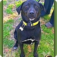 Adopt A Pet :: Michael Angelo - Salisbury, NC