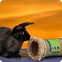 Adopt A Pet :: RootBeer - Marietta, GA
