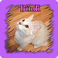 Adopt A Pet :: Bindi - Enid, OK