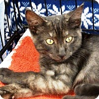 Adopt A Pet :: Smokey - Castro Valley, CA