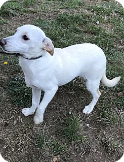 Terrier (Unknown Type, Small) Mix Puppy for adoption in Tumwater, Washington - Thelma