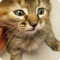 Adopt A Pet :: Rose 110032 - Joplin, MO