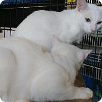 Adopt A Pet :: Casper - Seminole, FL
