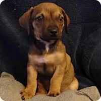 Adopt A Pet :: Rugrats: Dil Pickles - Corona, CA