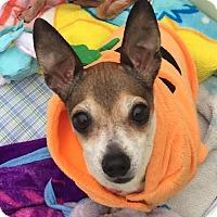 Adopt A Pet :: Chance - Bucks County, PA