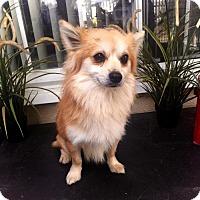 Adopt A Pet :: Alvin - Costa Mesa, CA