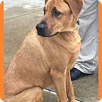 Adopt A Pet :: Hershey - Allen, TX