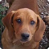 Adopt A Pet :: Copper - Glenpool, OK