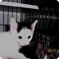 Adopt A Pet :: Troy - Island Park, NY