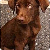 Adopt A Pet :: Hawaii - Cumming, GA