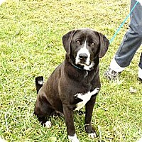 Adopt A Pet :: # 499-12 ADOPTED! - Zanesville, OH